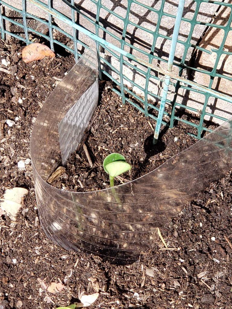 - 20200404 105549 768x1024 - April Garden Update