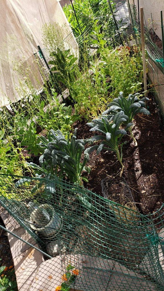 - 20200509 153126 576x1024 - May Garden Update