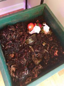 - 20180616 091621 2 225x300 - June Garden Update   Compost Worms