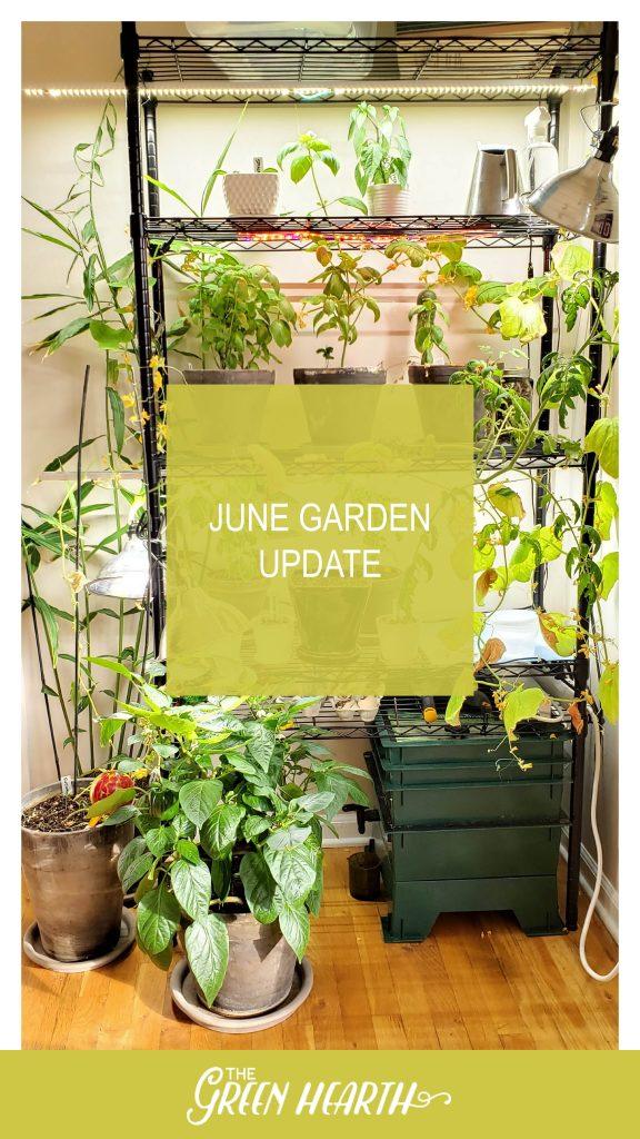 - Garden Update 2020 06 1 576x1024 - June Garden Update   Compost Worms